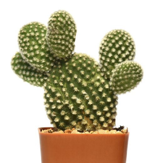 If you want to try and reduce humidity levels in your bathroom. A natural alternative includes adding a 'dehumidifying' plant, like a cactus, to your bathroom.